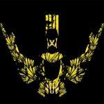 phoenix Skidoo XP graphics kit yellow overview
